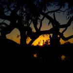 Okolice Innamincka (Dig Tree, Pustynia Strzeleckiego) - Australia Południowa