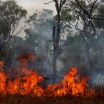 Pożar buszu - Kimberley - Australia Zachodnia