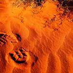 Pustynia Simpsona - Terytorium Północne