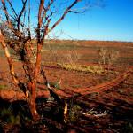 Obszar międzywydmowy - Canning Stock Route, Wielka Pustynia Piaszczysta, Australia Zachodnia